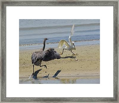 I Saw It First Framed Print by Phyllis Beiser