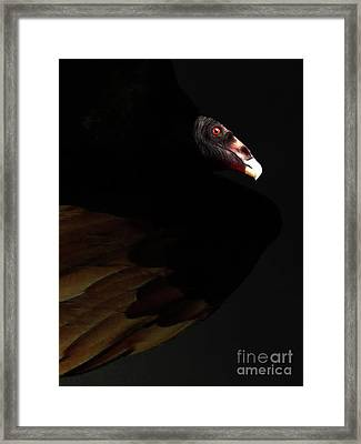 I Saw The Vulture In My Dreams Again Framed Print by Wingsdomain Art and Photography