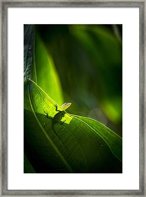 I See Green Framed Print