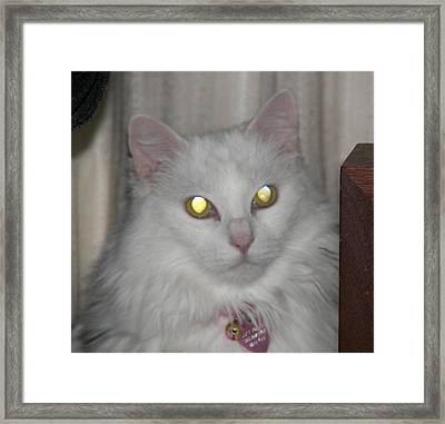 I See The Light... Framed Print by Judy Via-Wolff