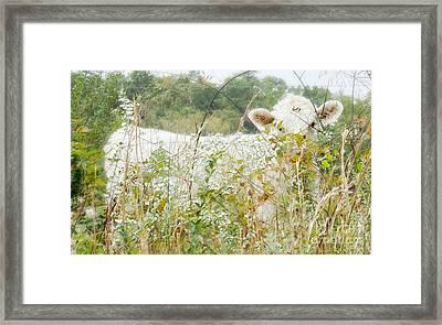 I See You Framed Print by Anita Faye