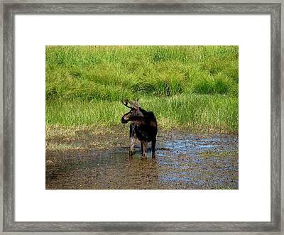 I See You Framed Print by Athena Ellis