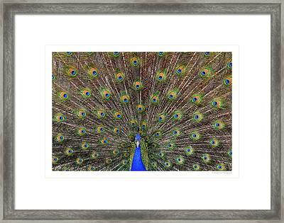 I See You Framed Print