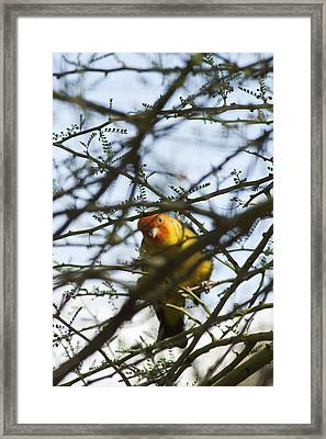 Framed Print featuring the photograph I See You by Daniel Hebard