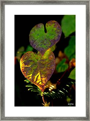 I See You In A New Light Framed Print