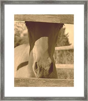 I See You Framed Print by J D Banks