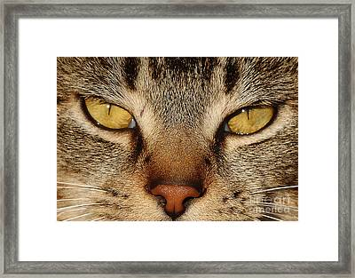 I See You Framed Print by Jim  Calarese