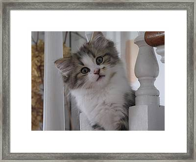 I See You Framed Print by Johanne Hammond