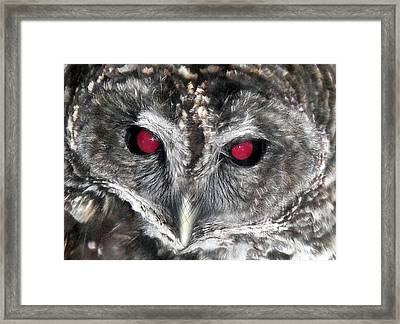I See You Framed Print by Karen Wiles
