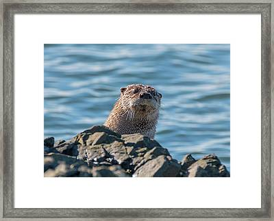 I See You Framed Print by Loree Johnson