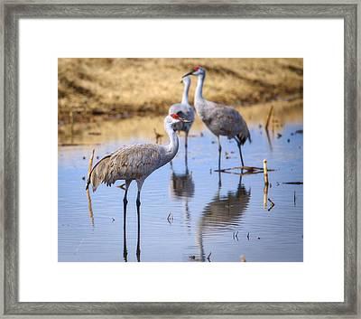 I See You Framed Print by Lynn Hopwood