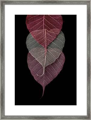 I See You Framed Print by Maggie Terlecki