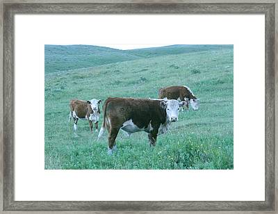 Framed Print featuring the photograph I See You by Mary Mikawoz