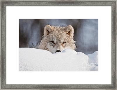 I See You Framed Print by Michael Cummings