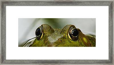 I See You Framed Print by Michael Peychich
