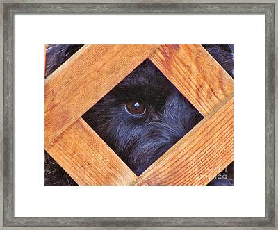 Look Closely  Framed Print