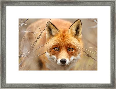 I See You - Red Fox Spotting Me Framed Print by Roeselien Raimond