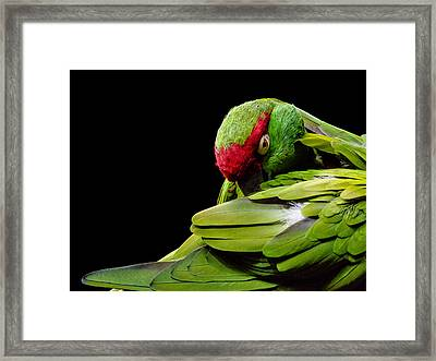I See You Framed Print by Rob Amend