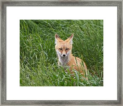 I See You Framed Print by Royce Howland