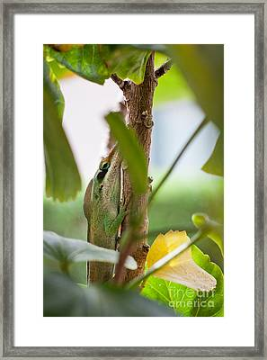 Framed Print featuring the photograph I See You by Sandy Adams