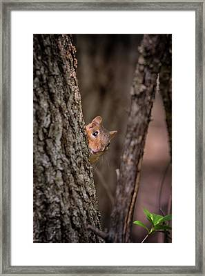 Framed Print featuring the photograph I See You by Susan Rissi Tregoning