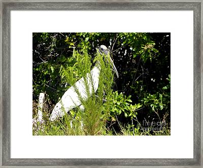 Framed Print featuring the photograph I See You by Terri Mills