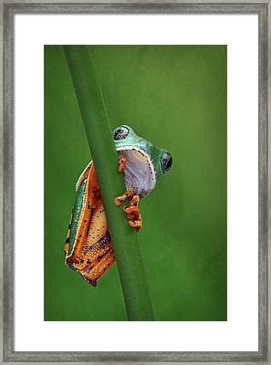 I See You - Tiger Leg Monkey Frog Framed Print by Nikolyn McDonald