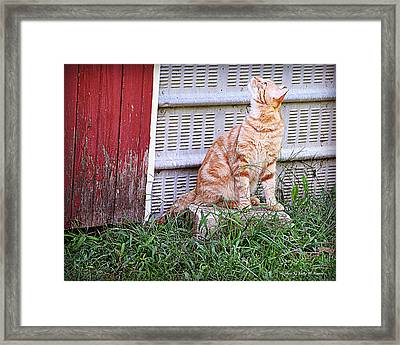 I See You Up There Framed Print by Kathy M Krause