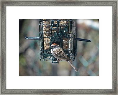 I Sing For My Supper Framed Print