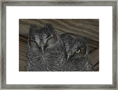 I Spy    I Spy With My Little Eye Framed Print by Monteen  McCord