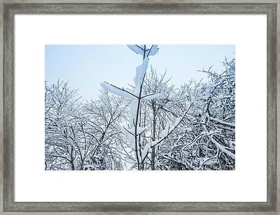 I Stand Alone- Framed Print