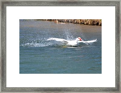 Framed Print featuring the photograph I Think I Can Fly  by Teresa Blanton