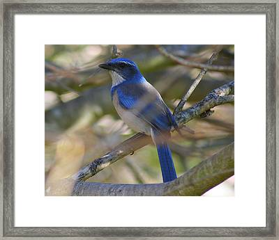 I Think I Found The Blue Bird Of Happiness Framed Print by Kerry Reed