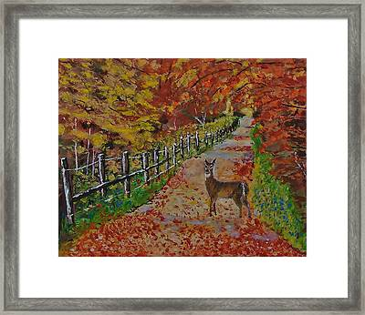 I Think I'm Lost Framed Print