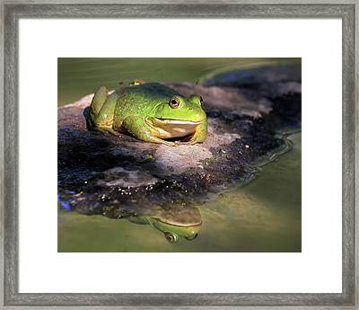 I Toad You So Framed Print by Donna Kennedy