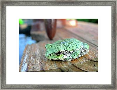 I Toad You So Framed Print by Randy Rosenberger