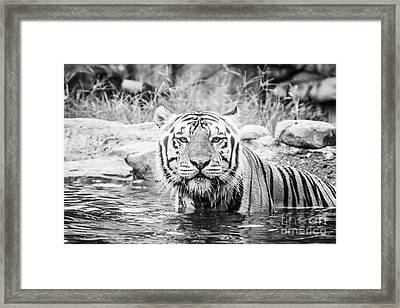 I Want To Play - Bw Framed Print