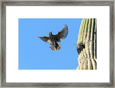 I Was Hoping You'd Drop By Framed Print by Emily Bristor