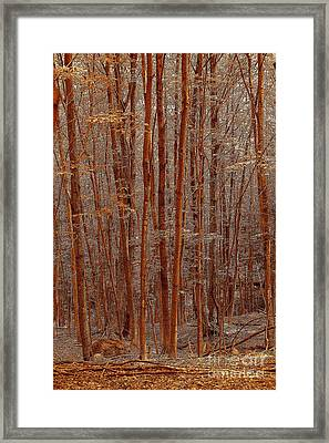 I Was Lost But Now I Am Found Framed Print by Diane E Berry
