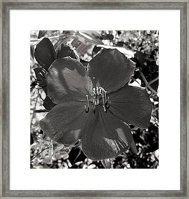 I Was Purple Framed Print