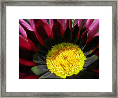 I Was Struck By Her Beauty Framed Print by Rosita Larsson