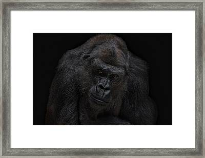 I Will Never Gonna Be A Silverback Framed Print by Joachim G Pinkawa