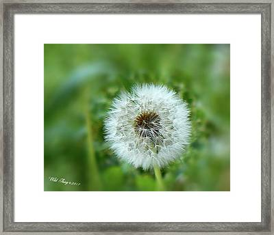 I Wish . . .  Framed Print by Wild Thing