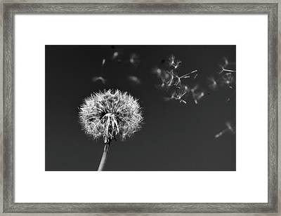 I Wish I May I Wish I Might Love You Framed Print