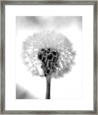 I Wish In Black And White Framed Print by Valerie Fuqua