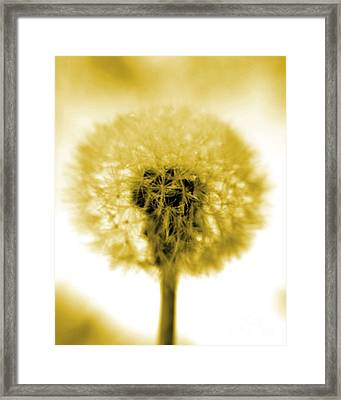 I Wish In Yellow Gold Framed Print by Valerie Fuqua