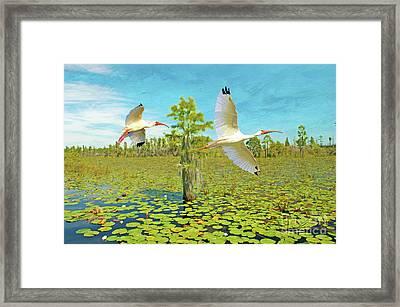 Ibis At Okefenokee Framed Print