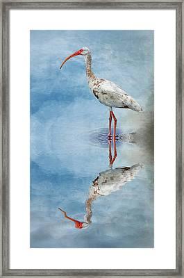 Ibis Framed Print by Cyndy Doty