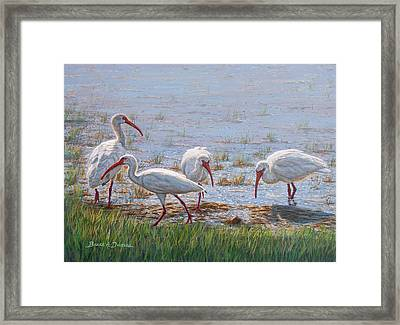 Ibis Excursion Framed Print by Bruce Dumas