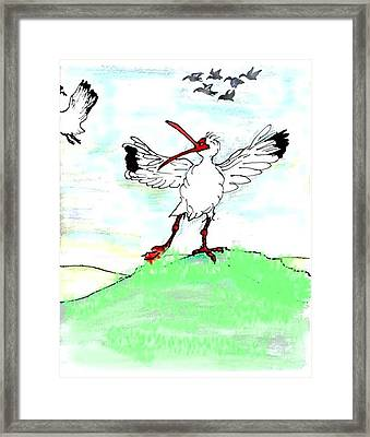 Ibis May Never Fly Again Framed Print by Carol Allen Anfinsen